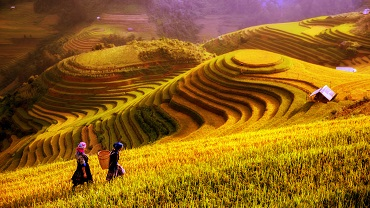 Customized Vietnam tours| Travel to Vietnam